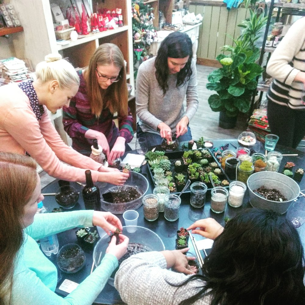 fundraiser workshops sonoma county petaluma succulents terrariums