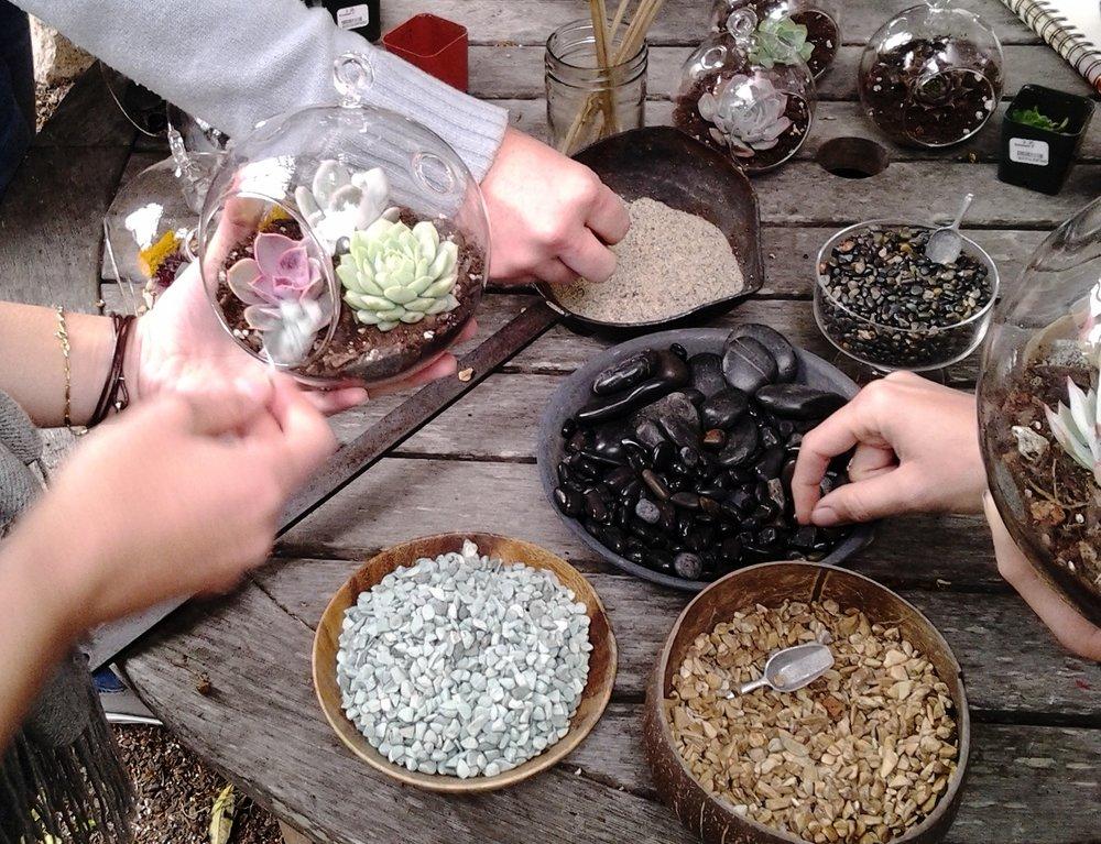 succulent terrarium macrame workshops san francisco bay area petaluma sonoma santa rosa