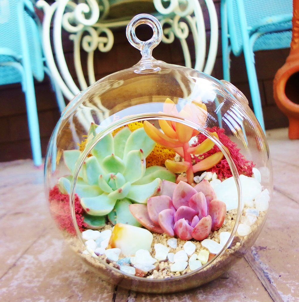 team building succulent terrarium workshop san francisco bay area petaluma santa rosa sonoma