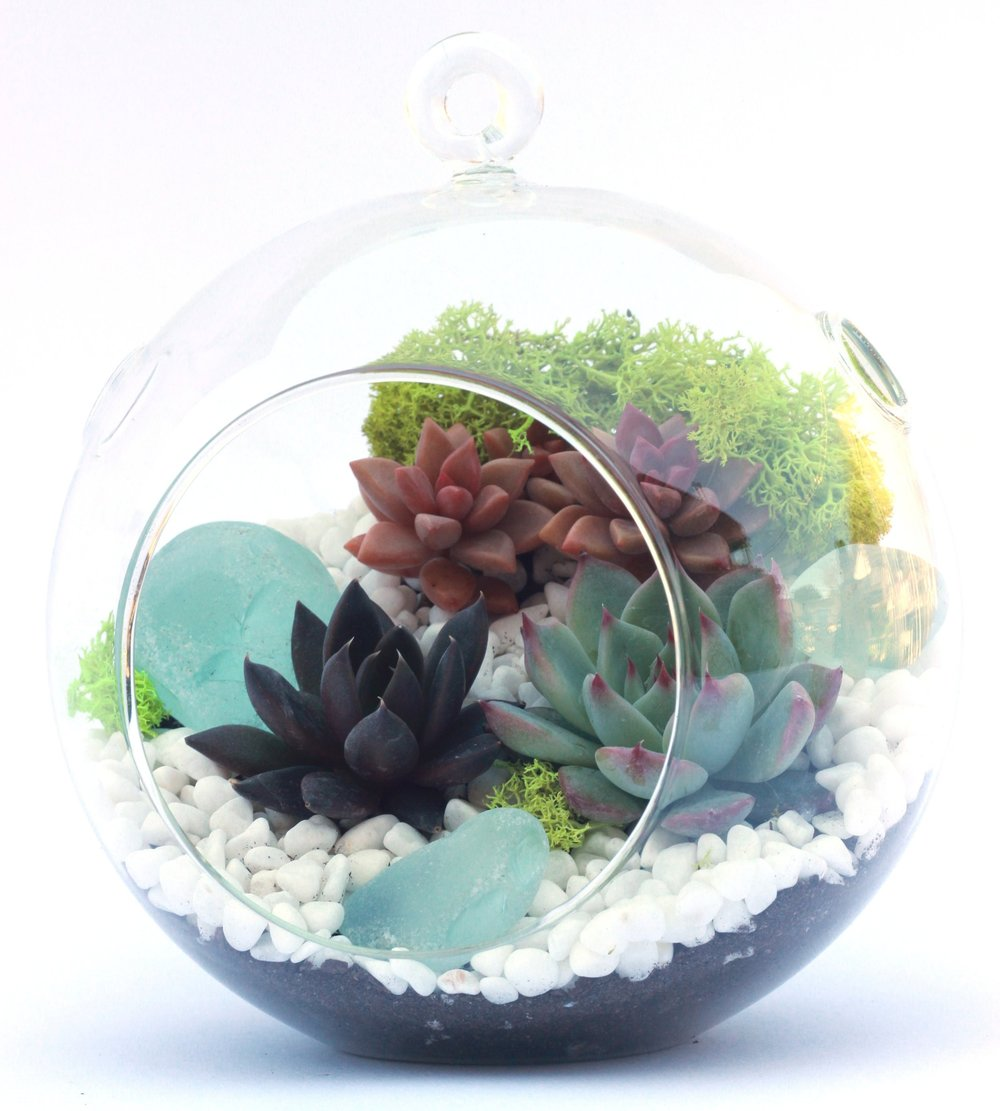succulent terrarium workshop san francisco bay area petaluma sonoma santa rosa