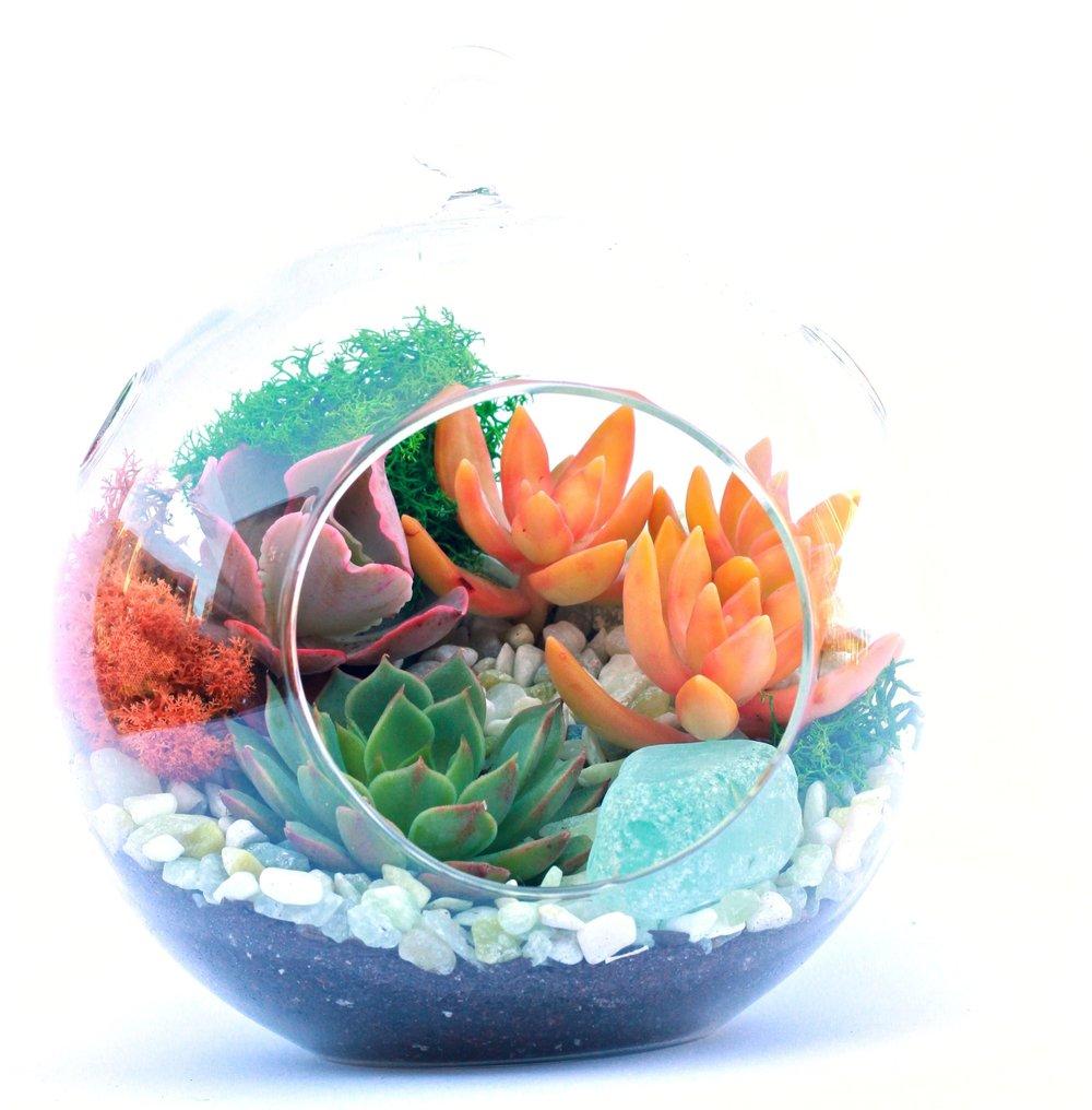 succulent terrarium fundraiser workshop petaluma santa rosa sonoma san francisco