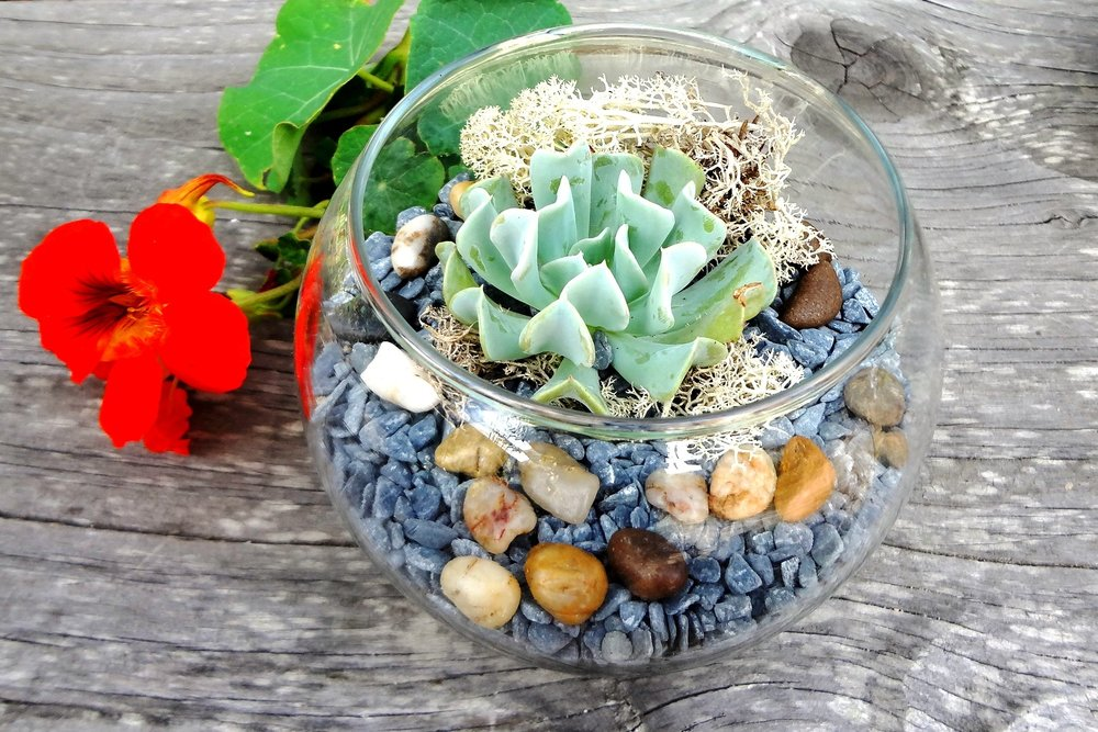 succulent terrarium wedding event activity san francisco bay area sonoma marin