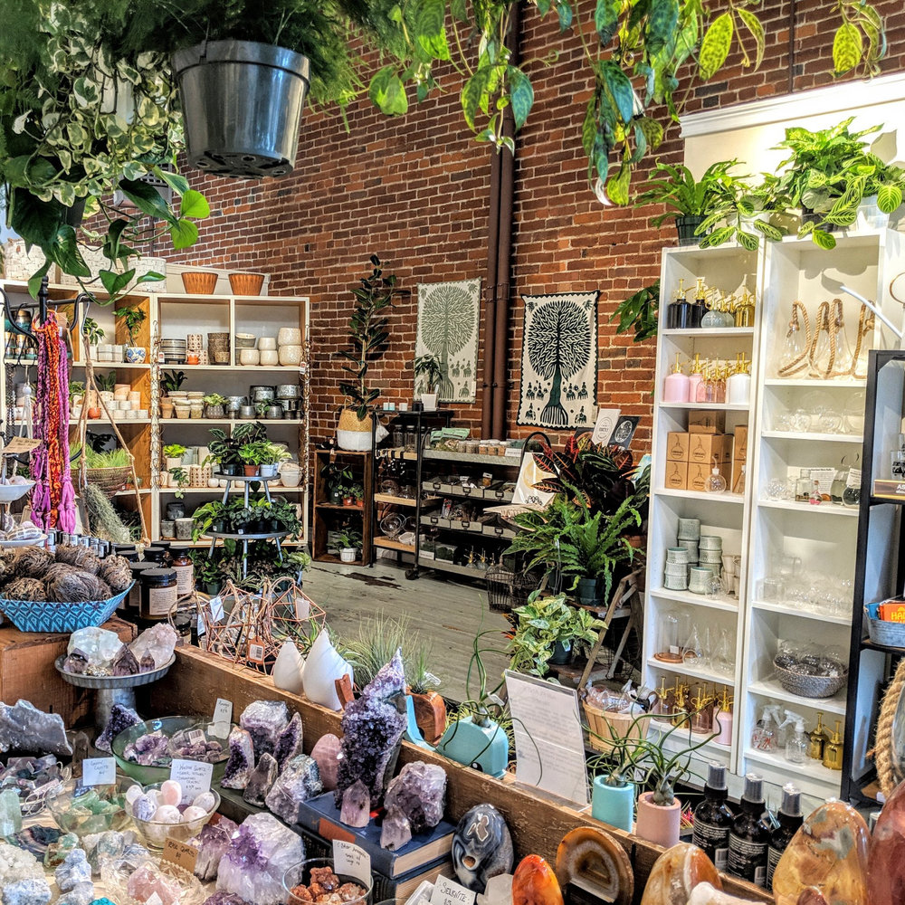 petaluma+plant+gift+shop+nursery+succulents+houseplants+terrariums+workshops+san+francisco+bay+area