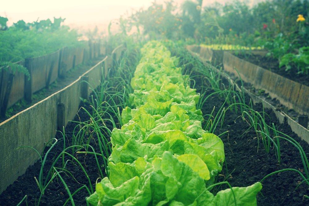 veggie-patch.jpg