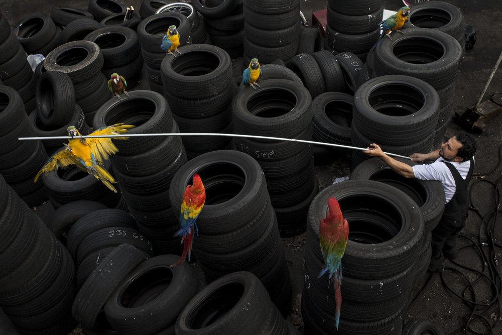 "Alzohairi looks to fish down one of his macaws from on top of a tire stack at his Fourth Street shop. He first began working in a tire shop at nine-years-old while growing up in Iraq. ""I wish to be a business man. I hope to have a few businesses and just stay busy with life,"" Alzohairi said. ""I just keep dreaming.""Feb. 11, 2017"