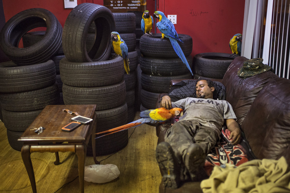 """Are you tired Mufasa?"" Alzohairi asks the red, blue and gold macaw as he prepares for bed on the couch in his tire shop. He has a loft bed above the office, but most nights he sleeps on the couch with some tires and his birds. Scribbled on the wall is the Muslim phrase, ""Praise to Allah."" July 6, 2017"