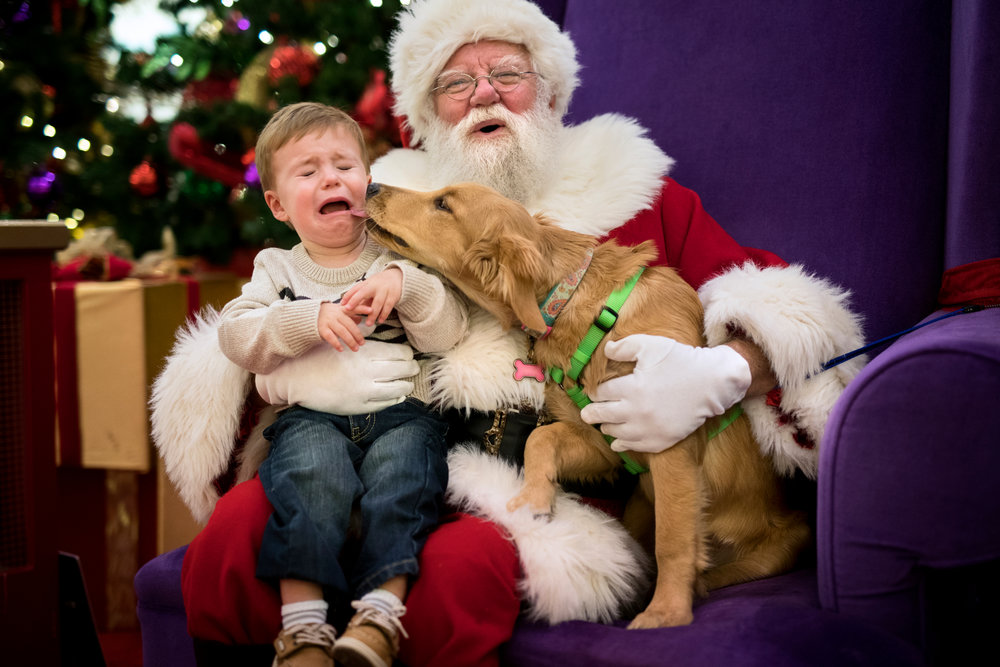 "James Sumner, 1, gets some encouragement from the new family pet, four-month-old golden retriever, Haley, after the youngster started to cry during his picture with Santa at Jefferson Mall on Monday evening. ""We really wanted to have her in the pictures with him this year,"" mother, Whitney Sumner, said.   Pet nights with Santa started at the mall years ago and has continued to grow in popularity. ""We are having three pet nights this year because of the popularity of the event,"" Jefferson Mall marketing manager, Sara Enlow, said. ""I'm not exactly sure what the strangest pet we've had brought in would be, perhaps a snake or hedgehog."""