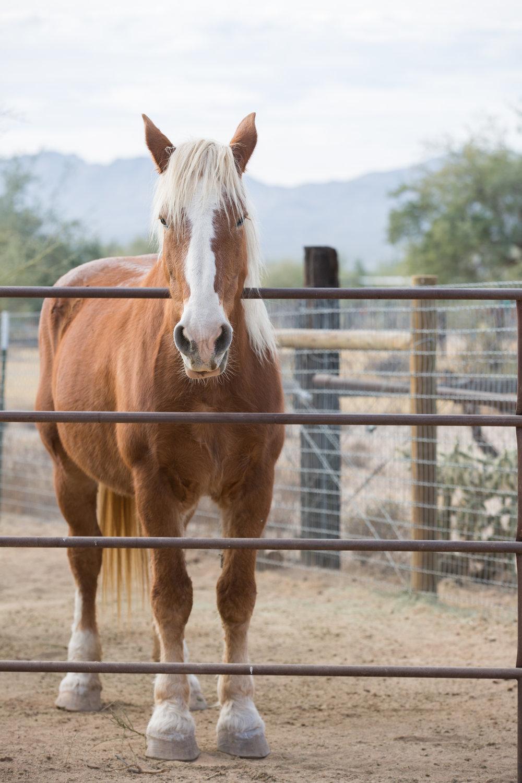 Horsey-7.jpg