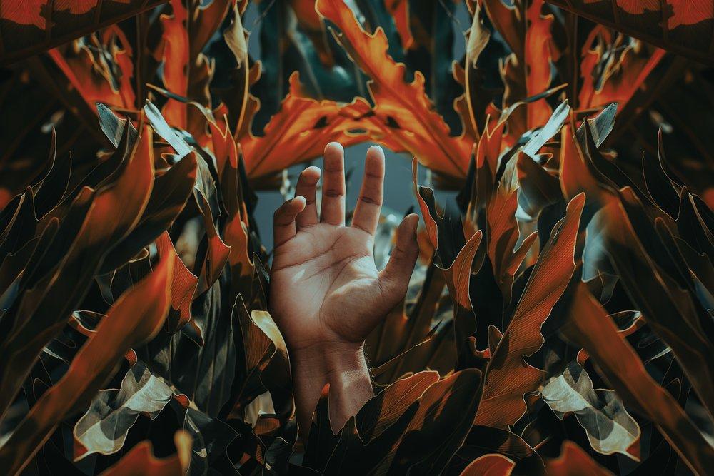 abstract-autumn-autumn-leaves-1492364.jpg