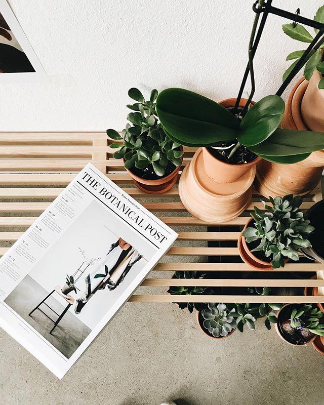 IT'S CHALLENGE TIME🌴👌🏼 Zusammen mit @pflanzenfreude verlosen wir an unser Lieblingsbild ein Pflanzenpaket mit 3 Zimmerpflanzen sowie 10 Ausgaben der limitierten @thebotanicalpost!  Was sollst du tun? 1. Poste ein Bild mit deinen Lieblingspflanzen! 2. Setze die #pflanzenfreude und #thebotanicalpost darunter, gern kannst du uns auch verlinken. 3. Mitmachen kannst du bis zum 28.12. Unser Lieblingsbild wird dann bei uns im Feed gefeatured! Wir freuen uns! 🌴🌿🌴[Werbung]