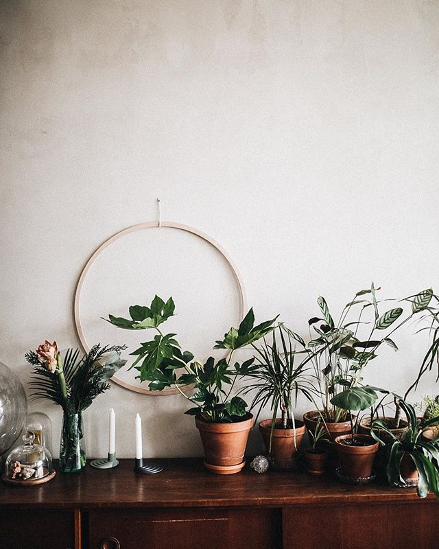 Botanical vibes at @______theo's home #thebotanicalpost