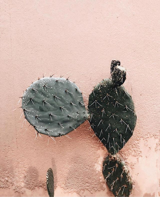 Picture by @taenjay ❤️🌵