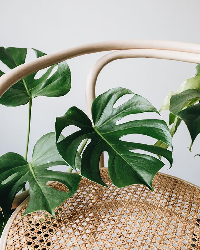 Monstera love!