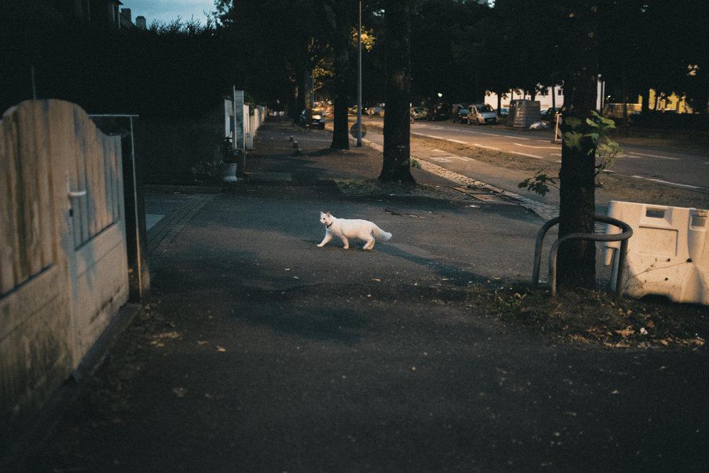cat-1979.jpg