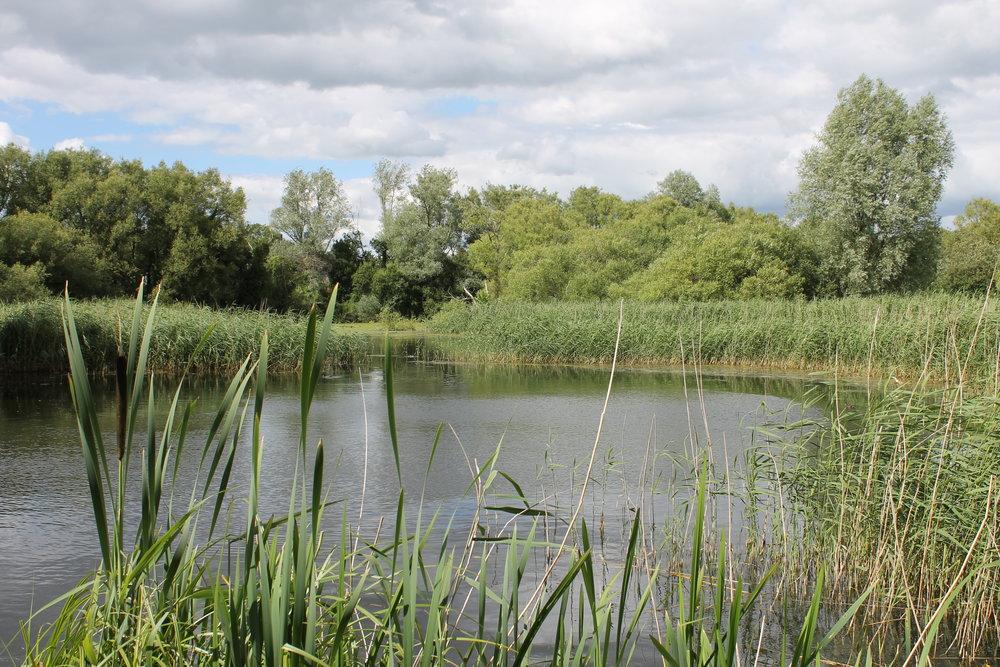 Magor Marsh pond 2016.jpg