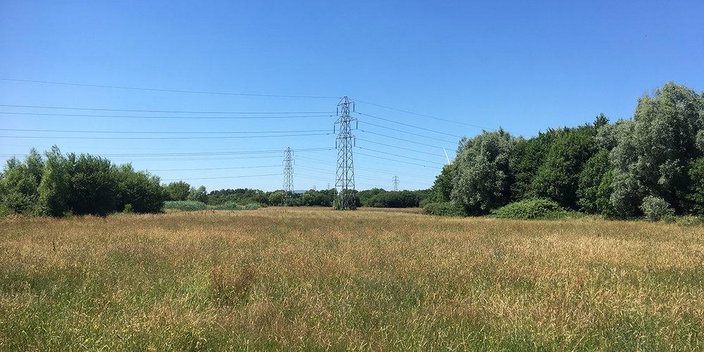 Great Traston Meadow SSSI