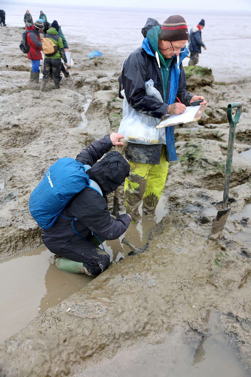 Excavating a bone from the mud