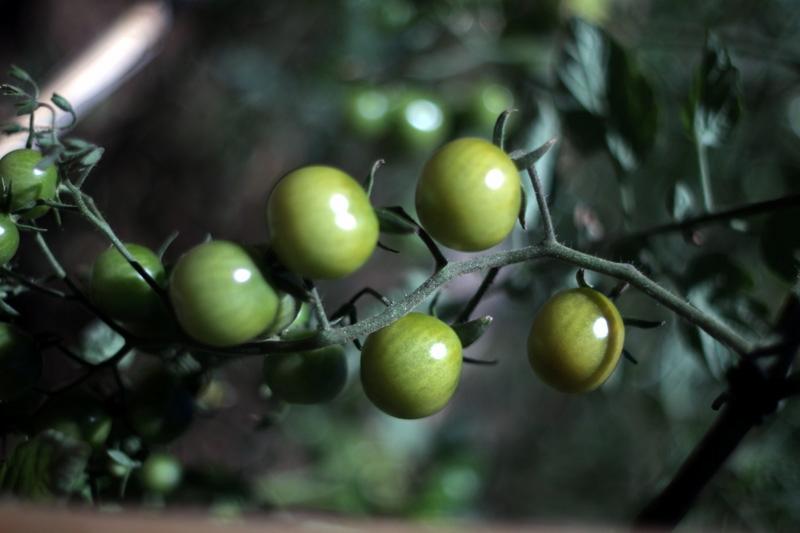 organic garden -