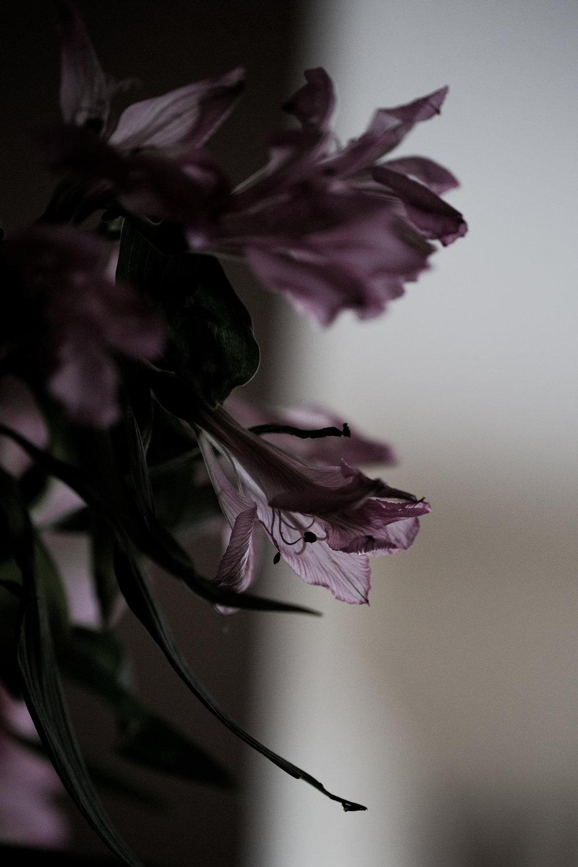 AZphotography100.jpg