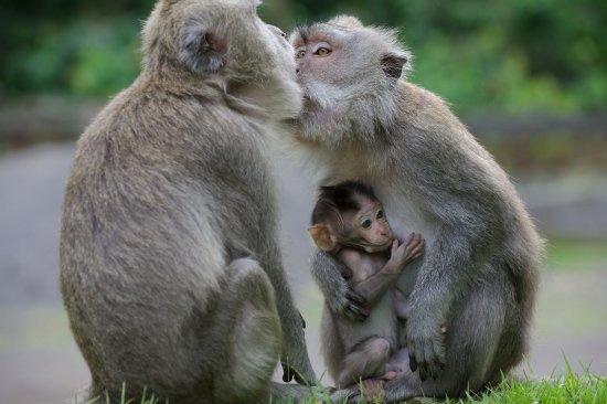 ubud-monkey-forest.jpg