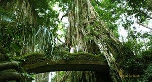 ubudmonkeyforest.jpg
