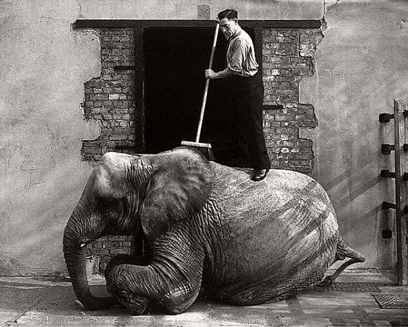 vintage-london-zoo-in-the-1930s-03.jpg