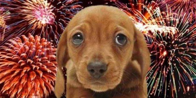http---o.aolcdn.com-hss-storage-midas-55428c22d1755c06256aca6bb07be71f-206452171-Cachorro+fogo+de+artificio+rep+portal+dog.jpg