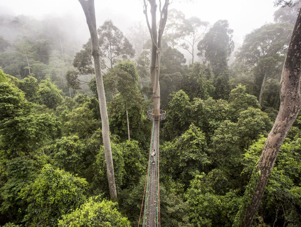 BORNEO: WHERE ANCIENT RAINFOREST MEETS THE WORLD'S RICHEST REEF   The Times