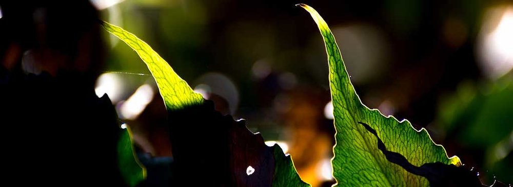 new-horizons-leaf.jpg