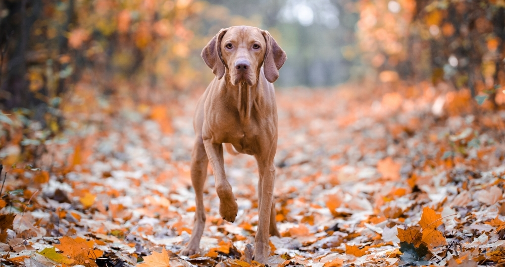 Meet Penny. - pawberry's hunting hound