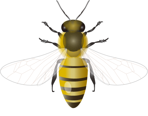201109_honey_bee.png