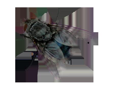 Copy of Flies