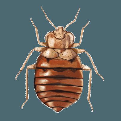 Copy of Copy of Copy of Copy of Bed Bugs