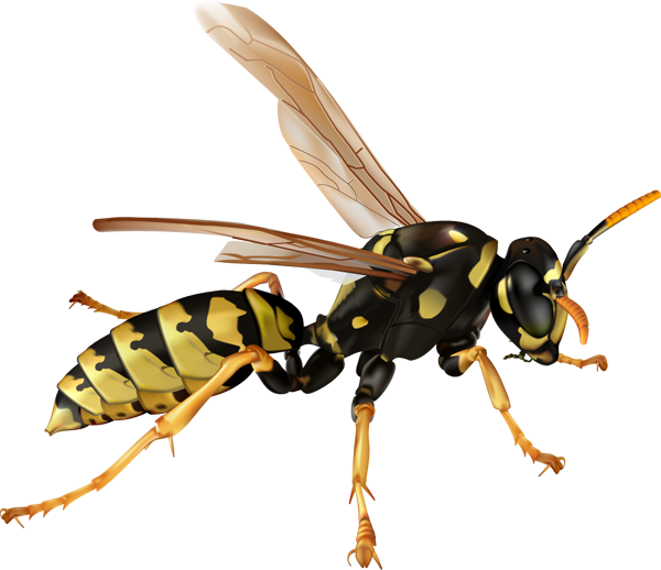 Copy of Copy of Wasps