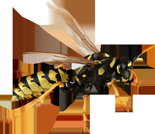 Copy of Copy of Copy of Copy of Wasps
