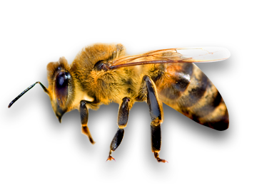 Copy of Bees