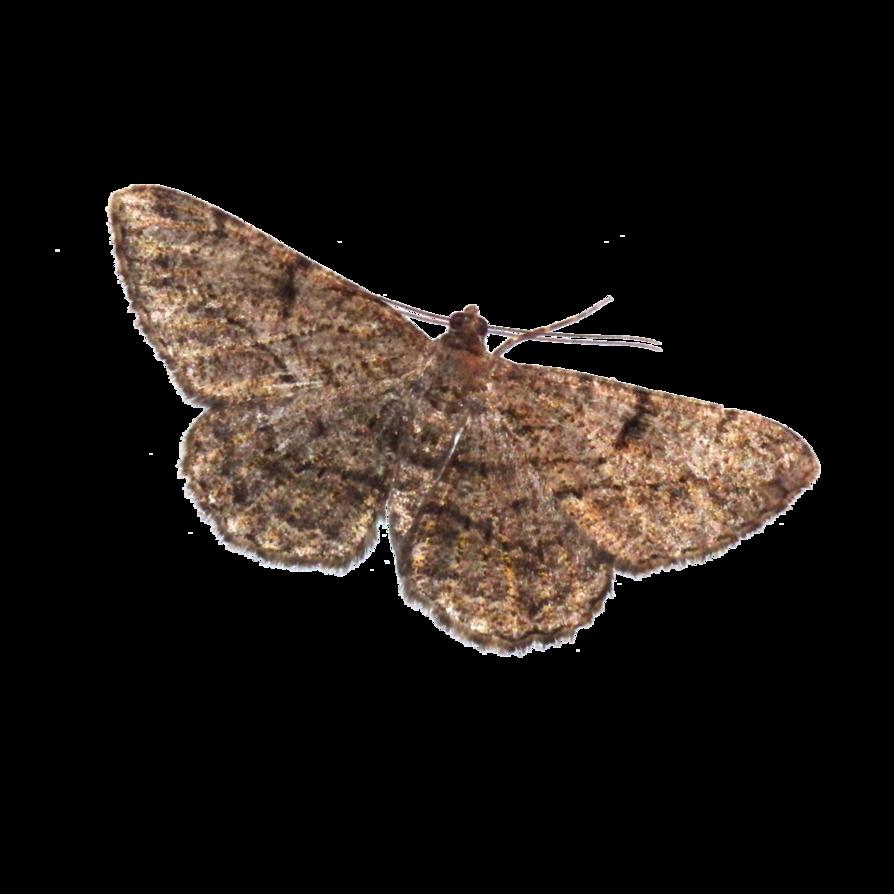 Copy of Moths