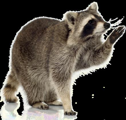Copy of Copy of Copy of Copy of Animal Removal