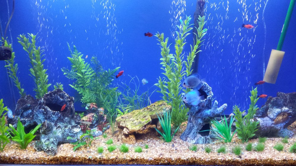 - Step 4: Secure PetsCover any fish tanks and turn off the pump. All people and pets must leave the area during treatment.