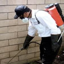 Left unattended to, pest problems can rapidly escalate in severity and even cause long term damage to the structure of your property and the health of its inhabitants.