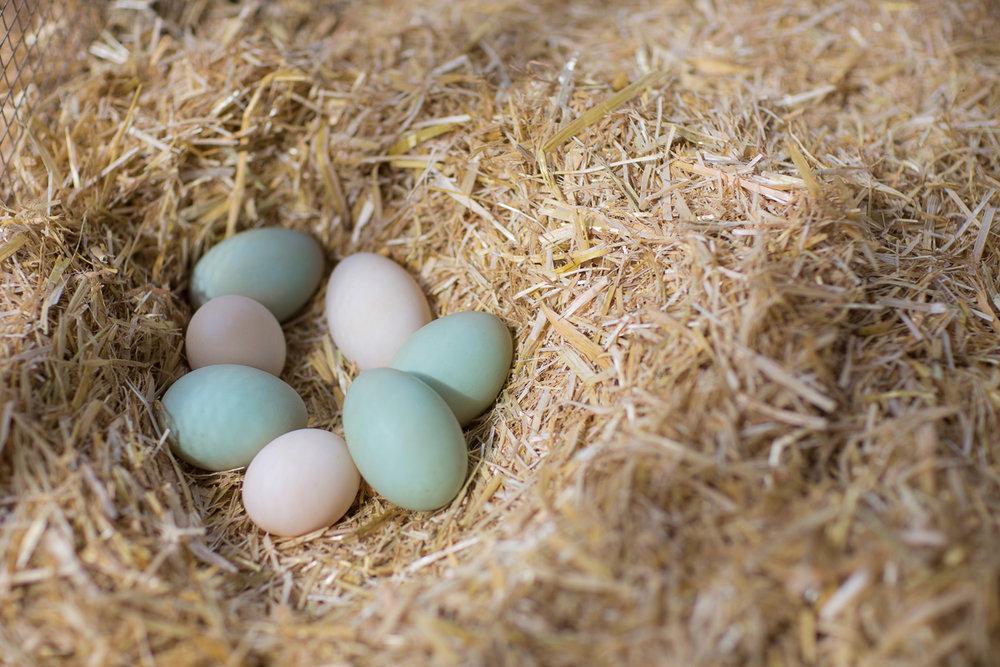 170306-duck-eggs-2.jpg