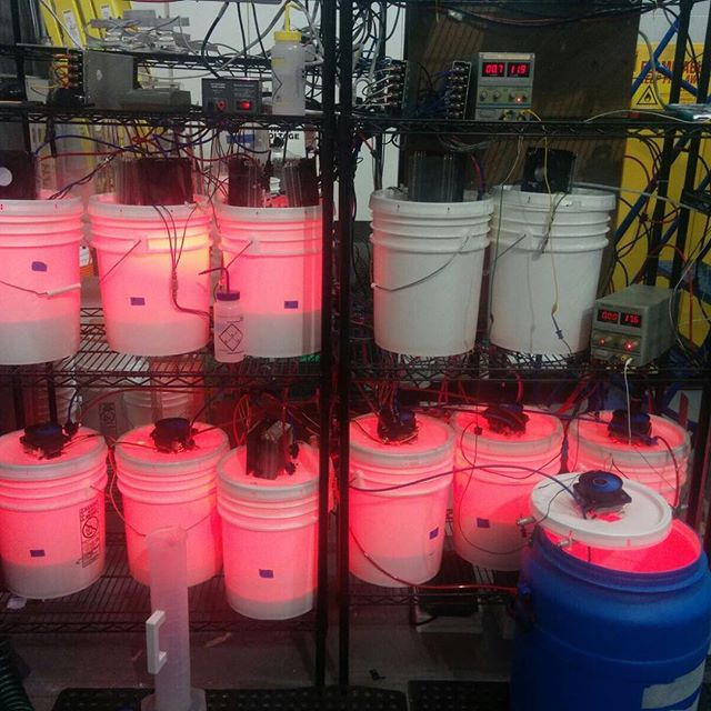 #algae loves #red ❤️ #pondtechnologies