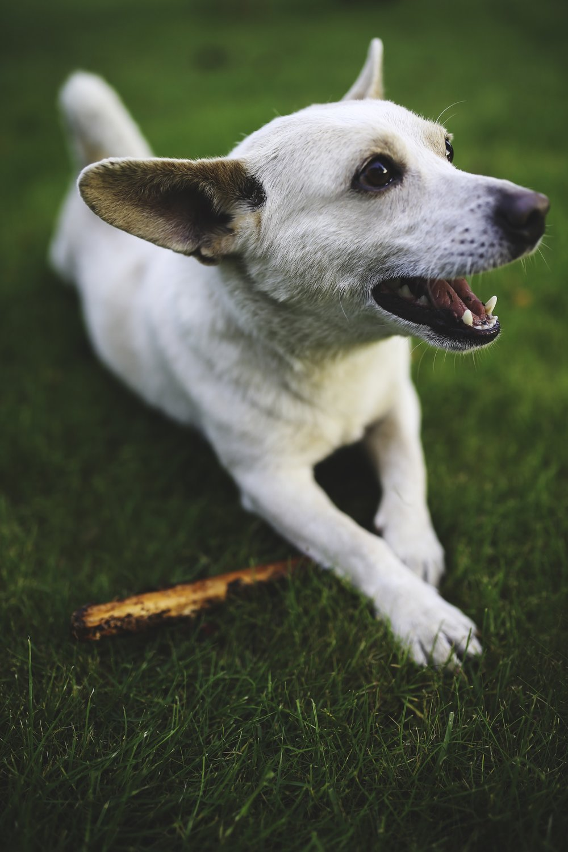 animal-dog-playing-grass.jpg