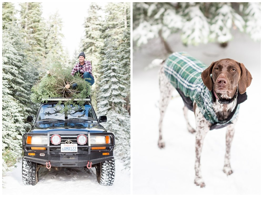 adorable dog with a warm vest on in the mountains cutting down Christmas Trees