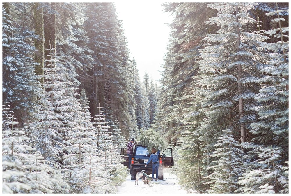 loading Christmas Trees into a truck in Butte Meadows