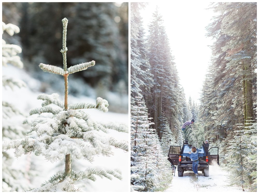 wedding photographer goes up with friends for portraits in the snow as they cut down Christmas Trees near Butte Meadows