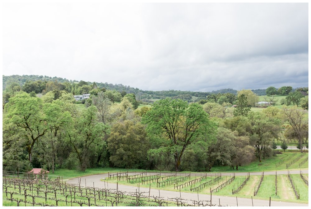 David-Girard-Vineyards-Wedding-Photos_4503.jpg