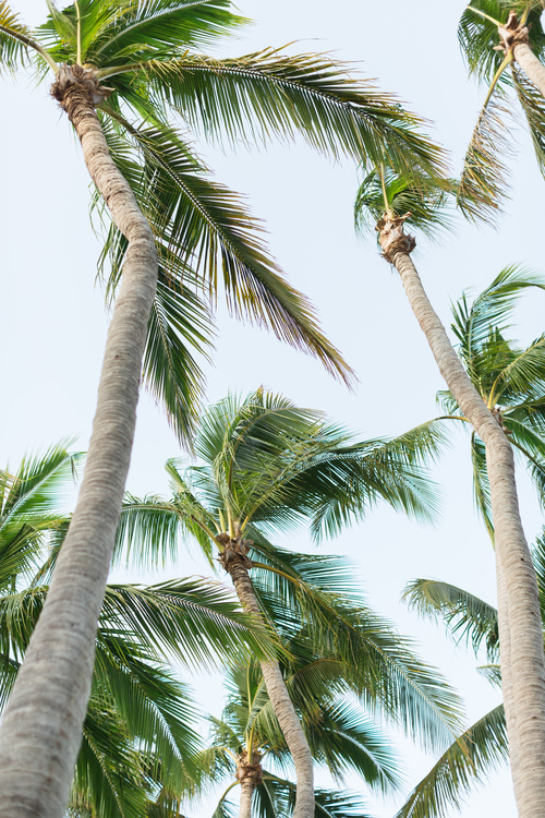 Isla-de-Navidad-Resort-Destination-Wedding-Photographer-TréCreative258of298.jpg