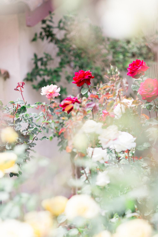Mission-Santa-Clara-Wedding-Photographer-153.jpg