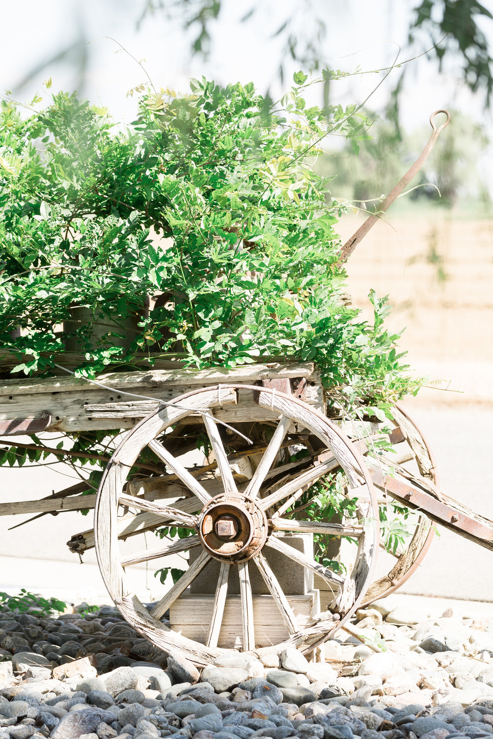 A-Private-Ranch-Northern-California-Wedding (110 of 229).jpg